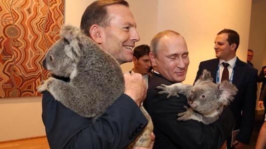 putin-koala